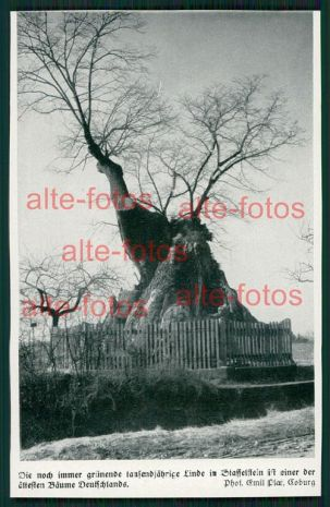 von 1933 -  tausendjährige Linde in Staffelsten