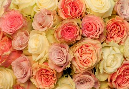 10 frische bunte rosen in sanften t nen ein fr hlicher blumenstrau blumenversa ebay. Black Bedroom Furniture Sets. Home Design Ideas