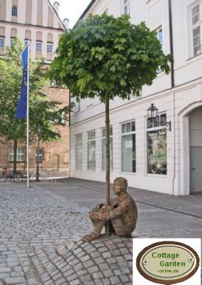 kugelahorn hochstamm 10 12 toller kugelbaum ebay. Black Bedroom Furniture Sets. Home Design Ideas