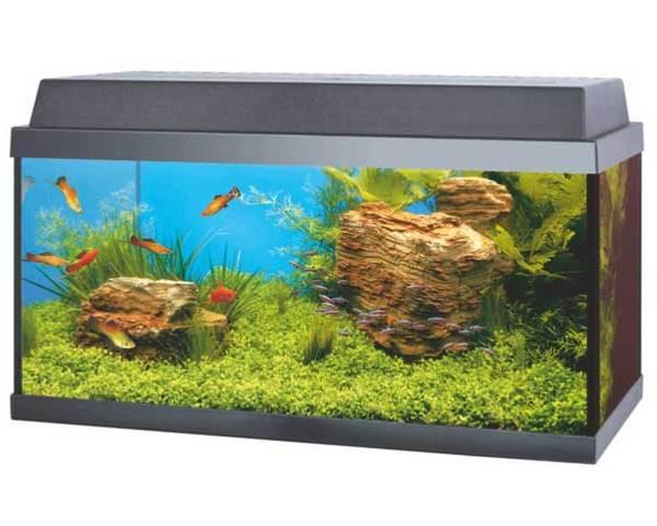 korall 60 54 liter aquarium einsteigerset ohne unterschrank ebay. Black Bedroom Furniture Sets. Home Design Ideas