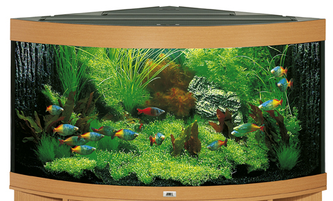 juwel trigon 350 aquarium 350l eckaquarium buche ebay. Black Bedroom Furniture Sets. Home Design Ideas