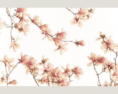 nature 0362 61 foto tapete vlies neu natur lachs rosa bl ten zweig ast blumen ebay. Black Bedroom Furniture Sets. Home Design Ideas
